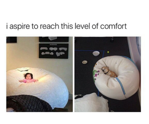 comfort, funny, and life image