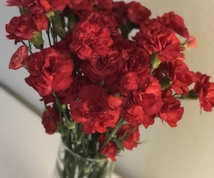 carnations, flowers, and red image