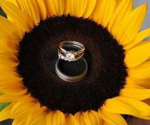 flower, rings, and sunflower image