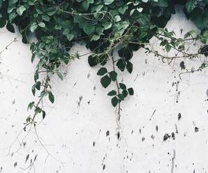alternative, plants, and white image