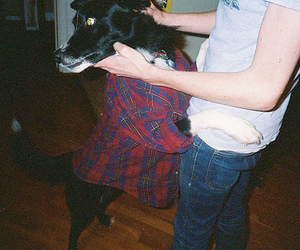 dog, boy, and flannel image