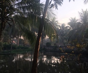 palm trees, jungle, and nature image