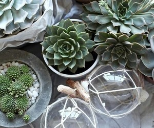 plants, succulent, and aesthetic image