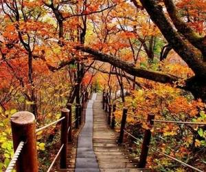 nature beautifull image