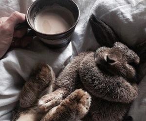 rabbit, coffee, and bunny image