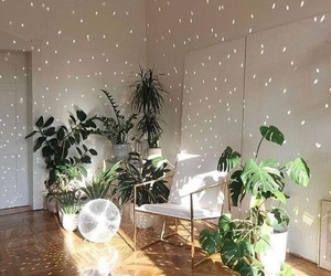 plants, aesthetic, and home image