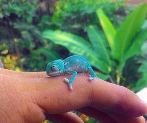 adorable, chameleon, and animal image