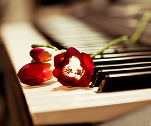 flowers, piano, and rose image