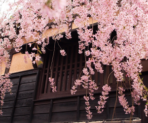 architecture, flower, and japan image