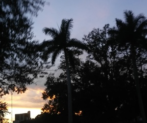 palmtrees, sky, and sunset image