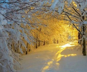snow, winter, and golden image