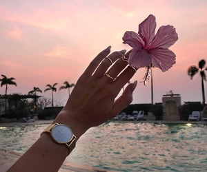 blogger, flower, and 🌸 image
