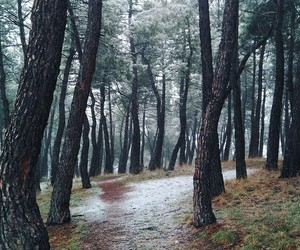 cold, place, and bosque image