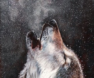 wolf, wallpaper, and animal image