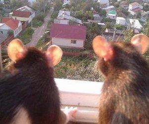 animal and rats image