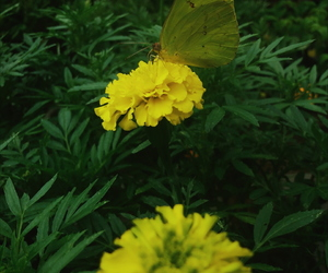 borboleta, butterfly, and flores image