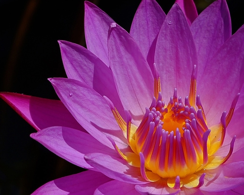 flor, lotus, and pink image