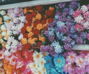 flowers, lavender, and orange image