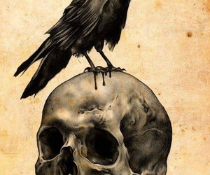 skull, crow, and raven image