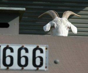 666, goat, and satan image