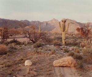 desert and travel image