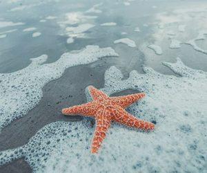 praia, stars, and summer image