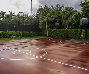Basketball and summer image