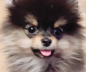 dog, jin, and kpop image