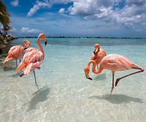 flamingo, beach, and animal image