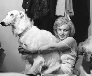 Marilyn Monroe, dog, and actress image