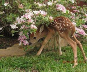 animal, flowers, and deer image