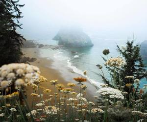 landscape, beach, and flowers image
