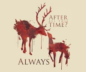 always, dumbledore, and harry potter image