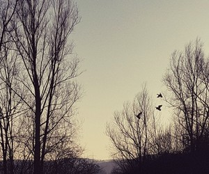 birds flying, high, and sunset image