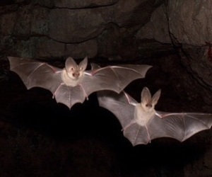 bat, animal, and bats image