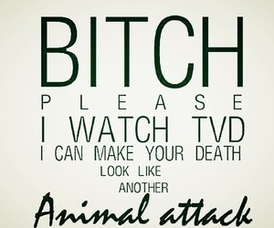tvd, the vampire diaries, and animal attack image