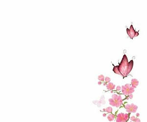 butterfly, pink, and wallpapers image