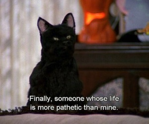 cat, quotes, and salem image