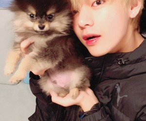 animals, tae, and dogs image