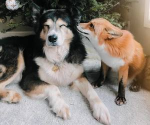animals, fox, and pretty image