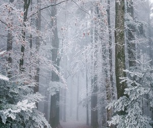 christmas, nature, and snowing image