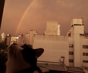 cat, city, and heaven image