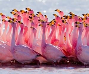 animal, birds, and animals image