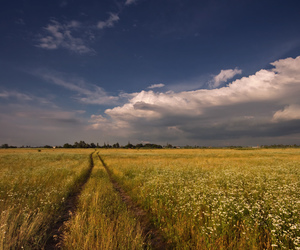 field, nature, and russia image