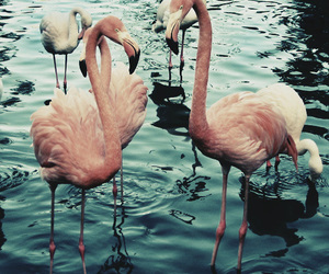 animal, pink, and water image