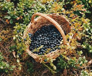 basket and blueberry image