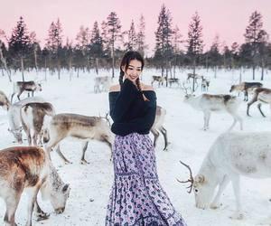 animals, christmas, and deer image