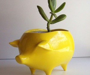 plants, decoration, and pig image