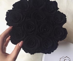 roses and black image
