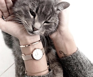 accessories, animals, and pets image